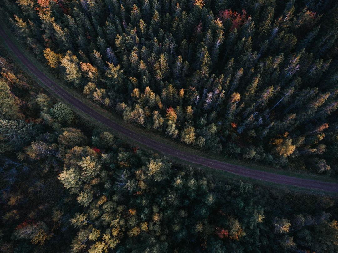 hutan terdiri dari bagian atas, permukaan, serta bawah