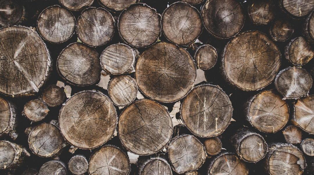 salah satu fungsi hutan adalah penghasil beragam jenis kayu