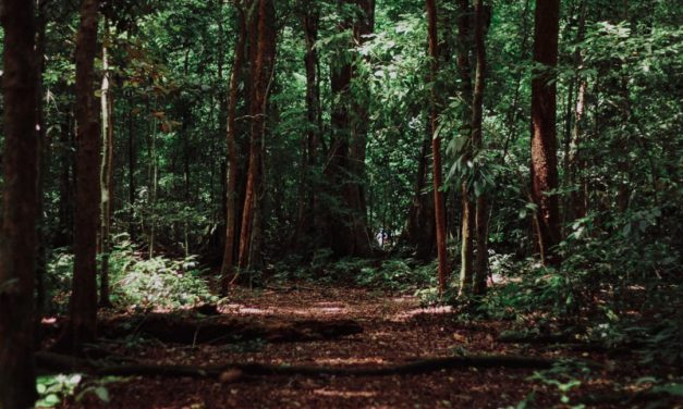 Pengertian Hutan, Bagian, Jenis dan Fungsinya