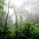 Jenis Hutan di Indonesia