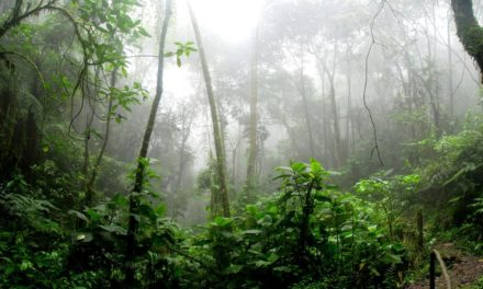Hutan Hujan – Pengertian, Ciri, Kekayaan dan Manfaat
