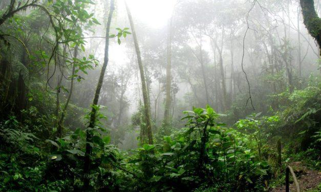 Hutan Hujan – Pengertian, Kehidupan, Ciri, Kekayaan, Kerusakan dan Cara Menyelamatkan