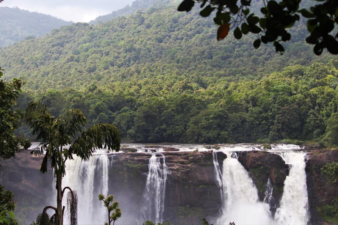salah satu hutan hujan yang paling terkenal adalah hutan amazon