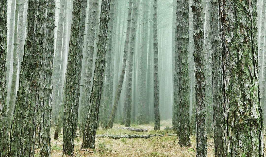 Hutan Musim – Pengertian, Ciri, Jenis, Manfaat, Sebaran, Pelestarian, dan Fakta Unik
