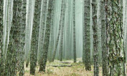 Hutan Musim – Pengertian, Karakter, Jenis, dan Sebaran