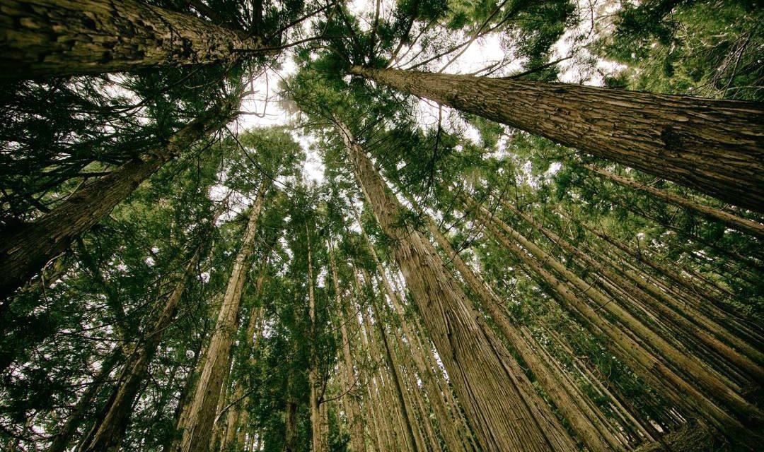 Hutan Primer dan Hutan Sekunder