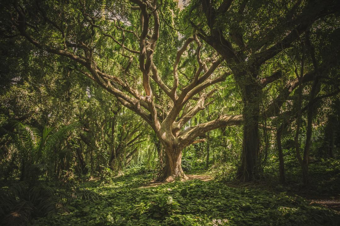 hutan primer dikenal pula dengan istilah hutan perawan