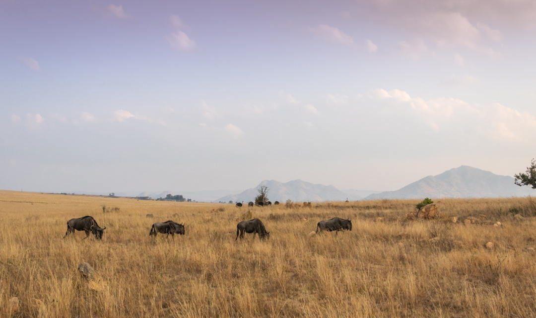 Hutan Sabana – Pengertian, Ciri, Flora Fauna dan Potensi Wisata
