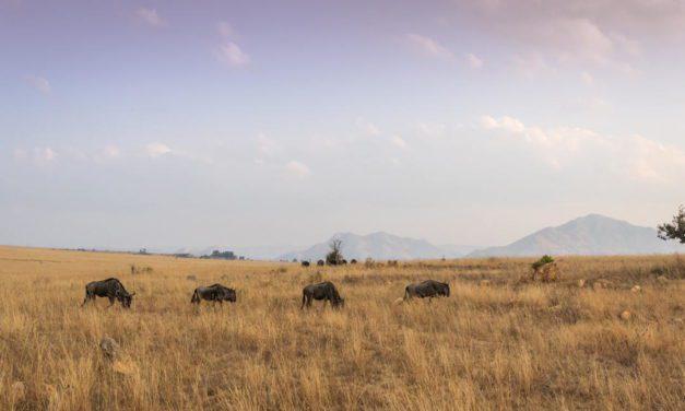 Hutan Sabana – Pengertian, Ciri, Flora Fauna, Manfaat dan Potensi Wisata