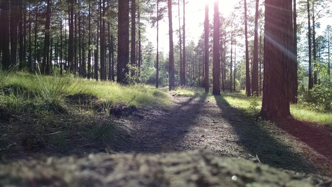 regenerasi dari hutan primer disebut hutan sekunder