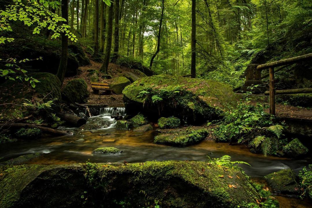 hutan yang tersebar di seluruh dunia memiliki jenisnya masing-masing