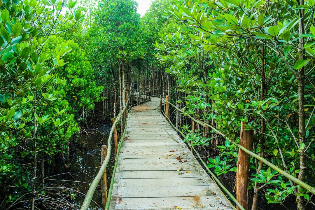 aneka ragam hutan tersebar di indonesia
