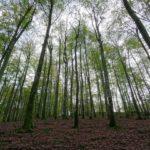 Hutan Buatan - Pengertian, Ciri, Jenis & Manfaat