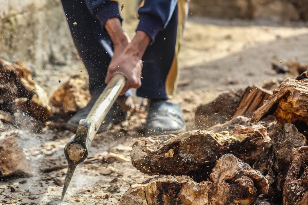 penebangan liar menjadi salah satu faktor rusaknya hutan