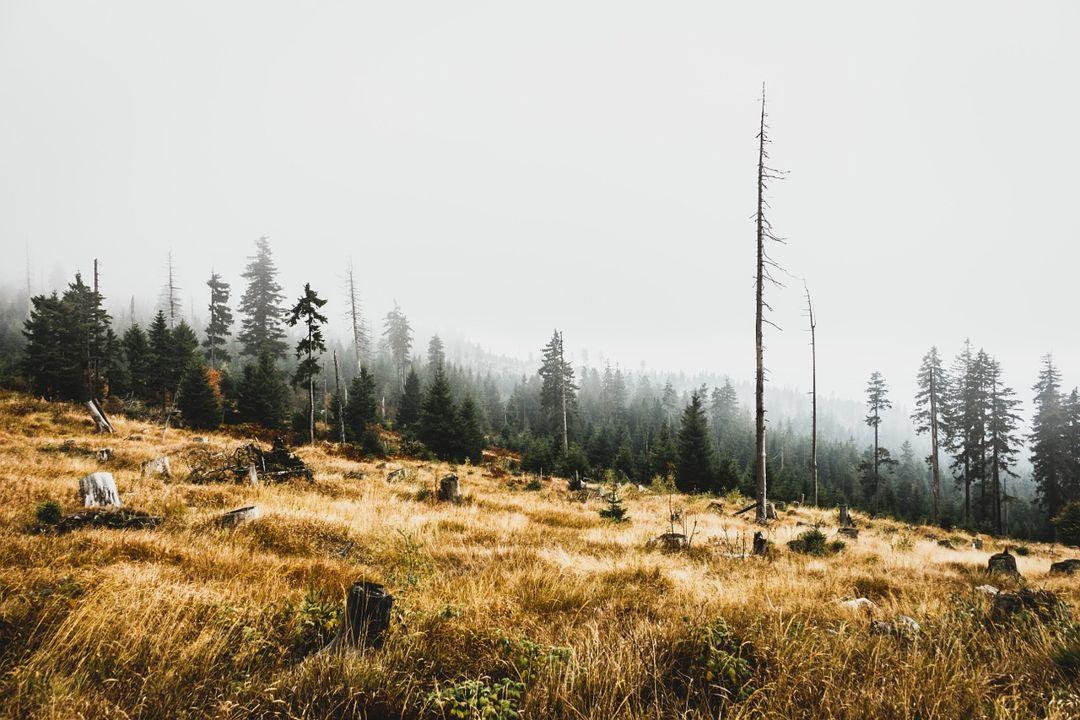 pelestarian hutan sangat diperlukan agar hutan tidak semakin rusak