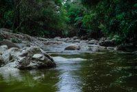 hutan hujan bermanfaat untuk menjaga peredaran air