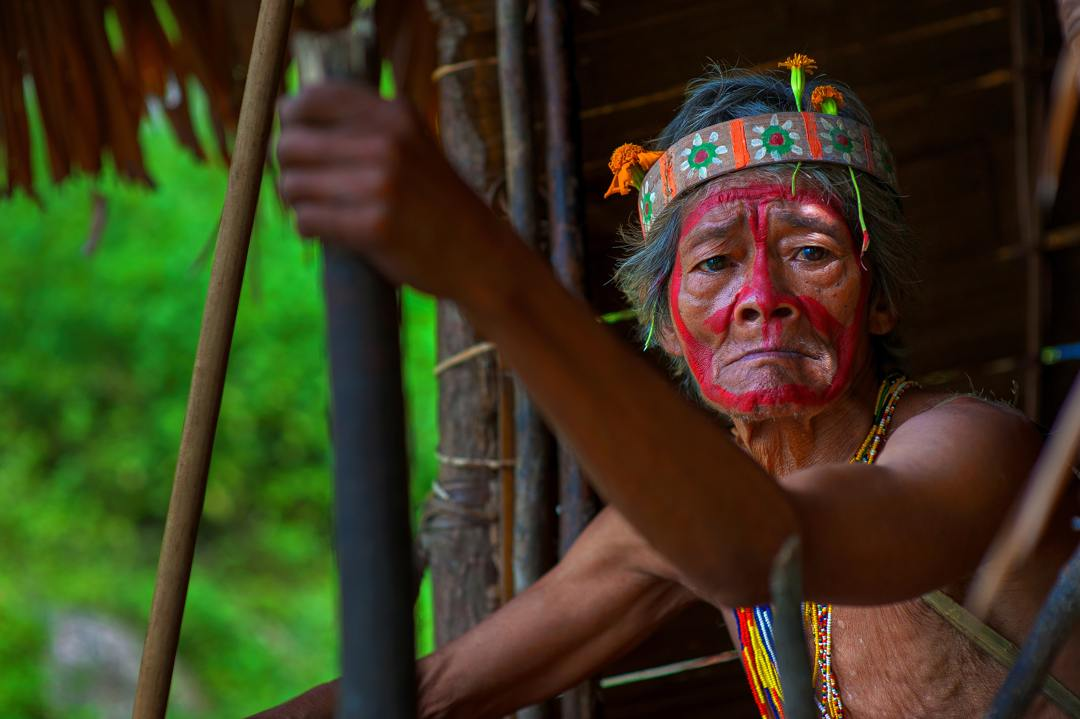 hutan hujan menjadi tempat tinggal suku-suku asli