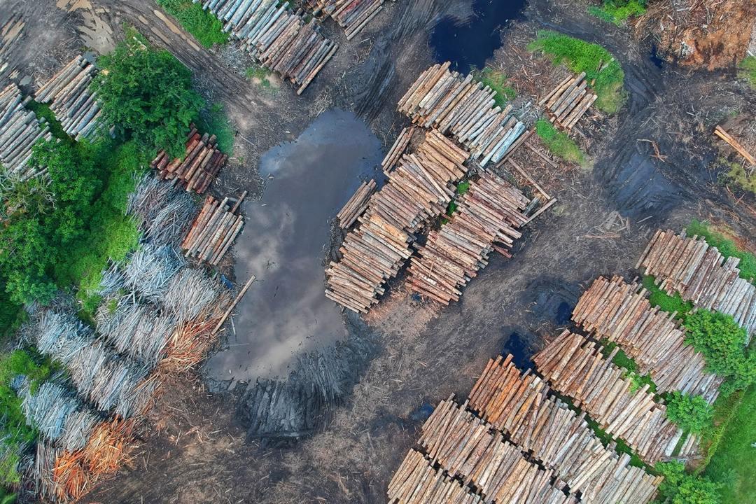 salah satu contoh deforestasi adalah penebangan liar
