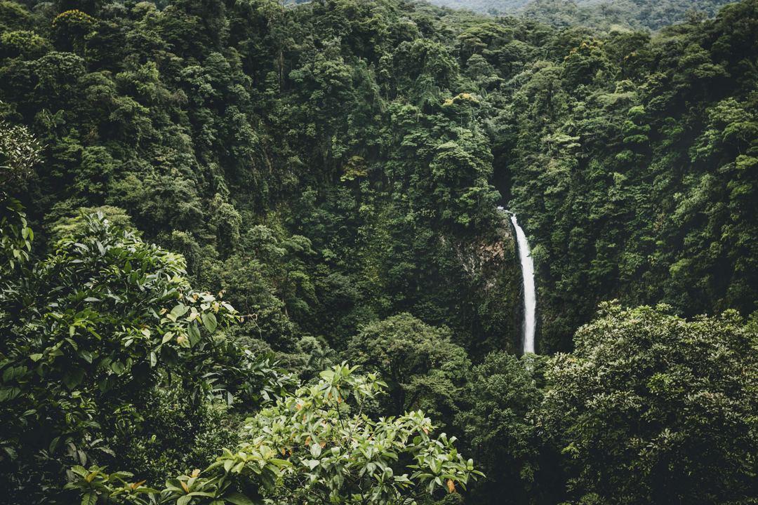 negara menilai hutan dari 2 segi yaitu dari segi status dan segi fungsi