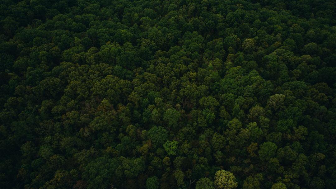 pengertian hutan juga diatur dalam undang-undang