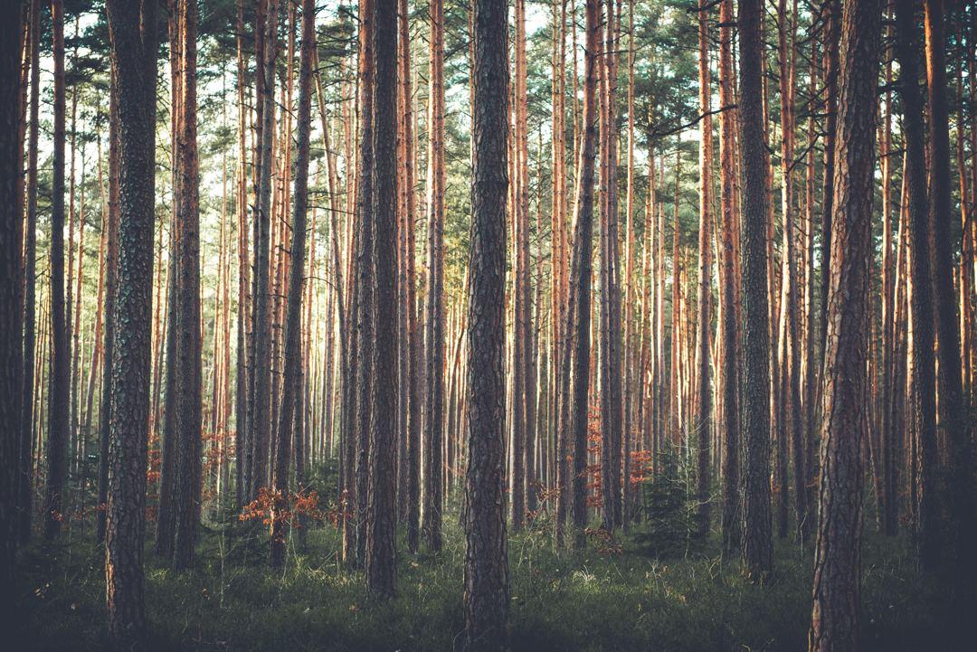 jenis hutan pada tiap negara berbeda-beda