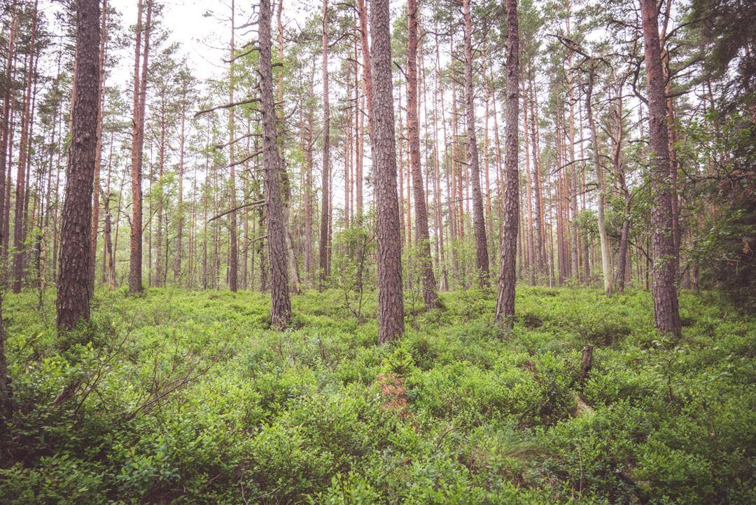 hutan memiliki pengertian berbeda-beda berdasarkan pendapat para ahli