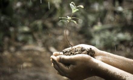 Reboisasi – Pengertian, Tujuan, Manfaat, Dampak, Perbedaan Dengan Penghijauan