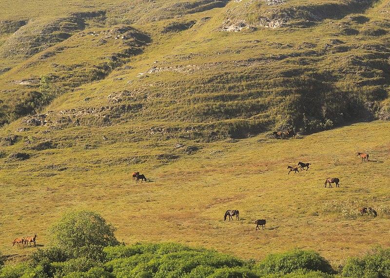 area sabana juga dimanfaatkan masyarakat untuk beternak