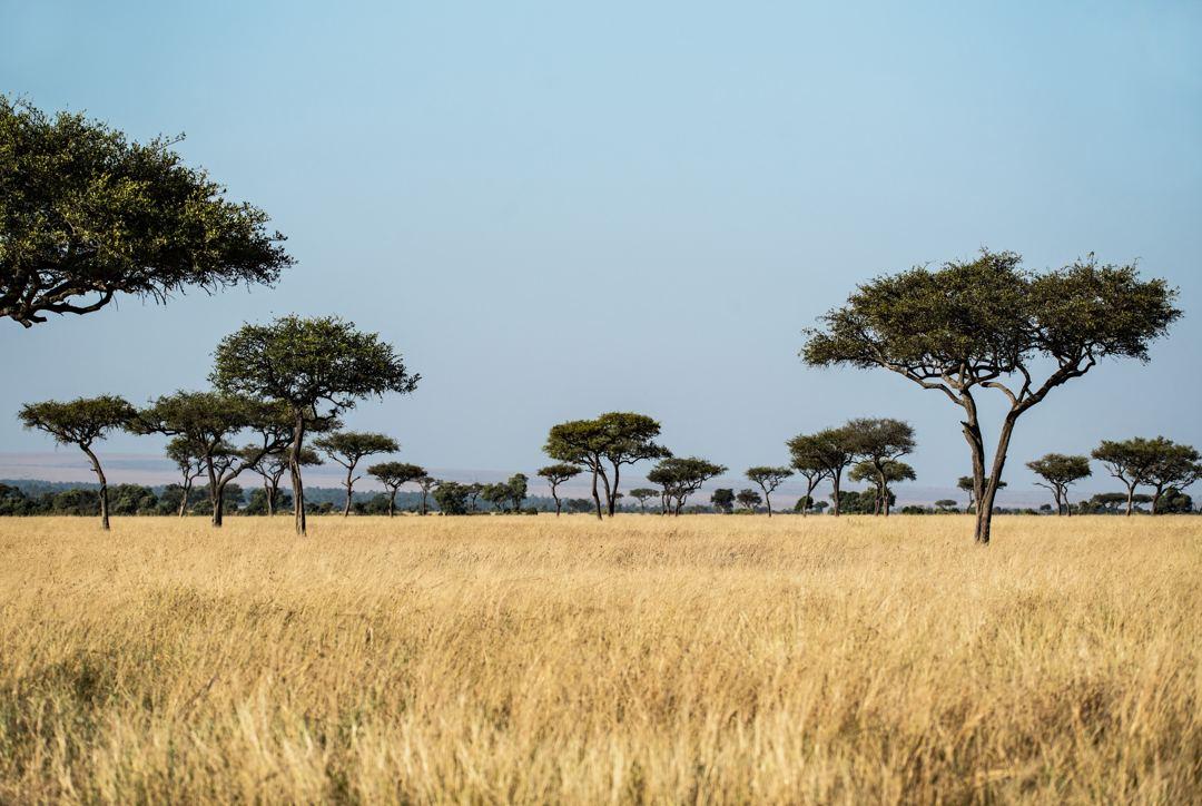suhu udara padang rumput sabana cenderung hangat dengan curah hujan sedikit