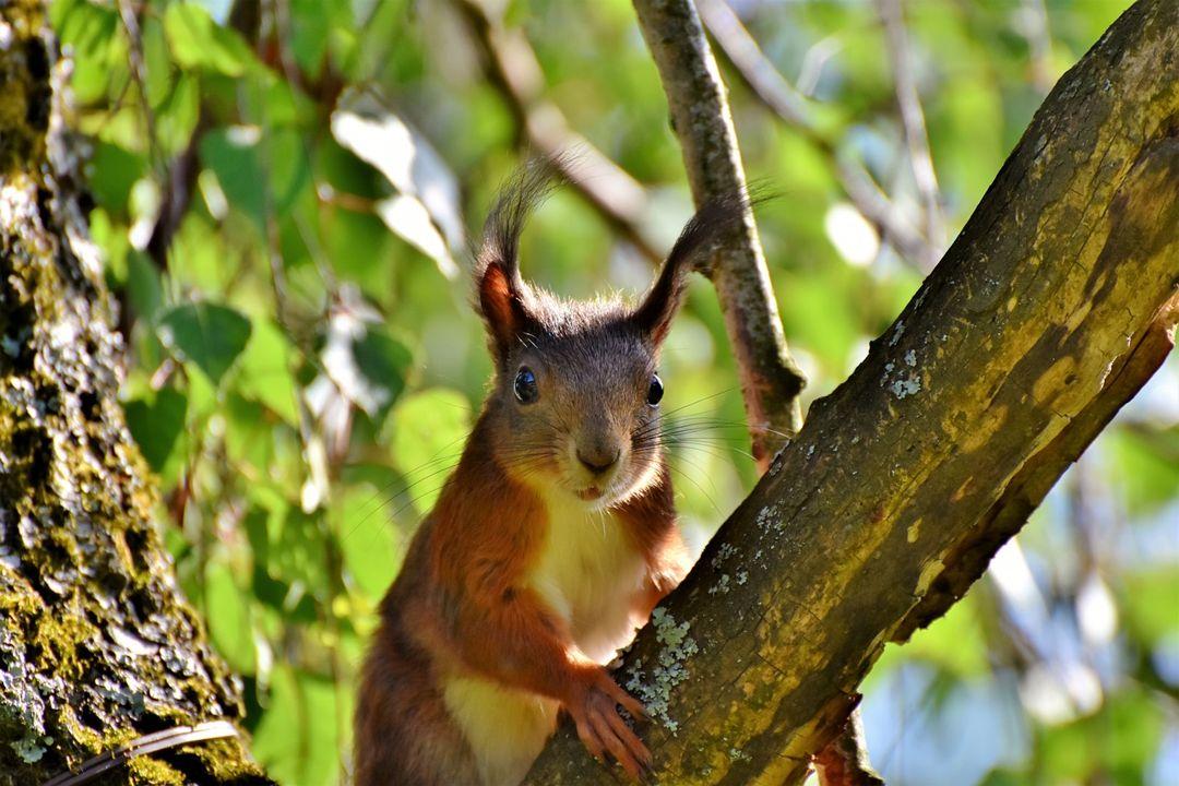 tupai merupakan salah satu penghuni hutan musim