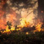 Kebakaran Hutan 1997, Sejarah Kelam Hutan Indonesia