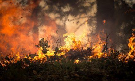Kebakaran Hutan – Penyebab, Dampak dan Cara Mengatasinya