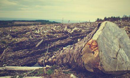 Deforestasi – Pengertian, Sebab Akibat & Cara Mengatasi