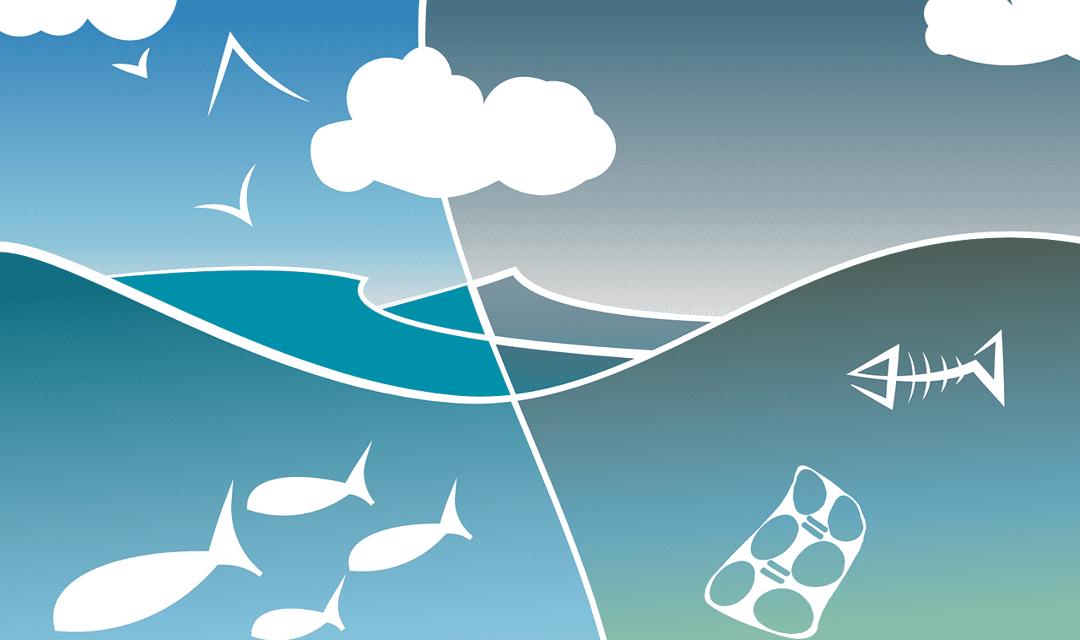 Ekosistem – Pengertian, Komponen, Hubungan & Jenis