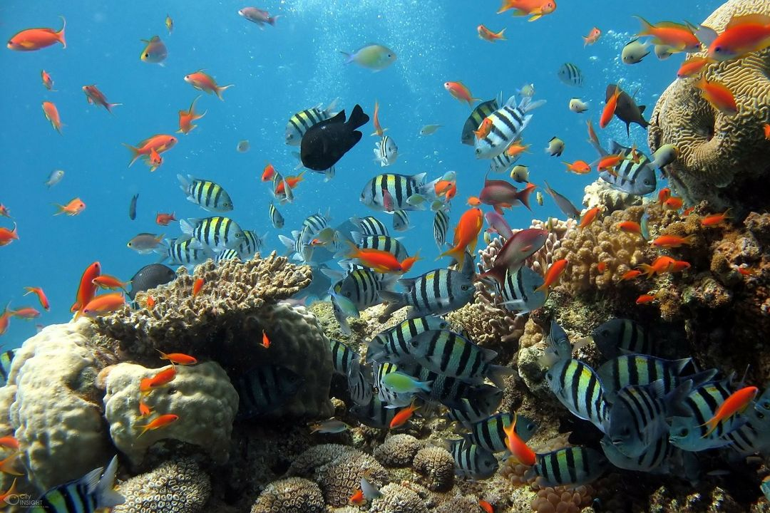 ekosistem air laut