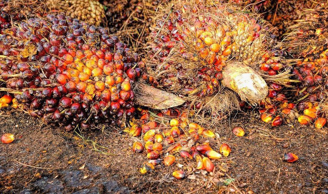 Bioenergi – Pengertian, Jenis, Manfaat dan Studi Kasus
