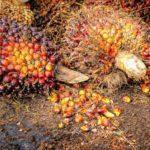 Bioenergi - Pengertian, Jenis, Manfaat dan Studi Kasus