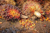 hasil kelapa sawit