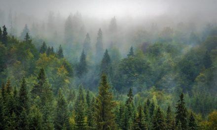 Hutan Pegunungan – Pengertian, Jenis & Ciri Ekosistem