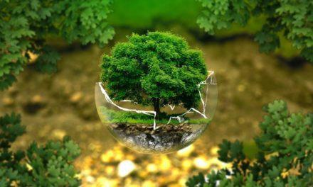 Biosfer – Pengertian, Macam, Karakteristik dan Fungsi