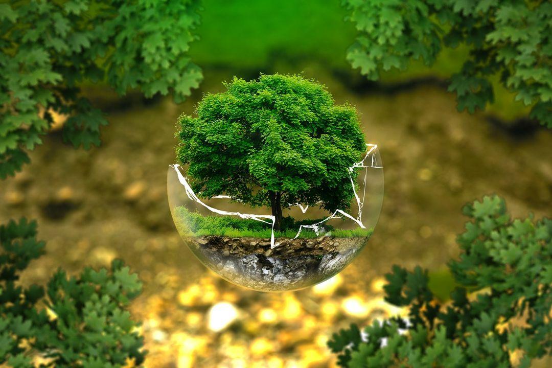karakteristik biosfer