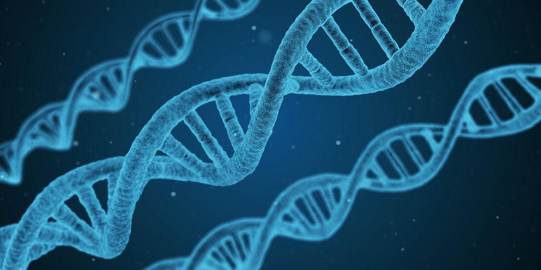 keanekaragaman gen