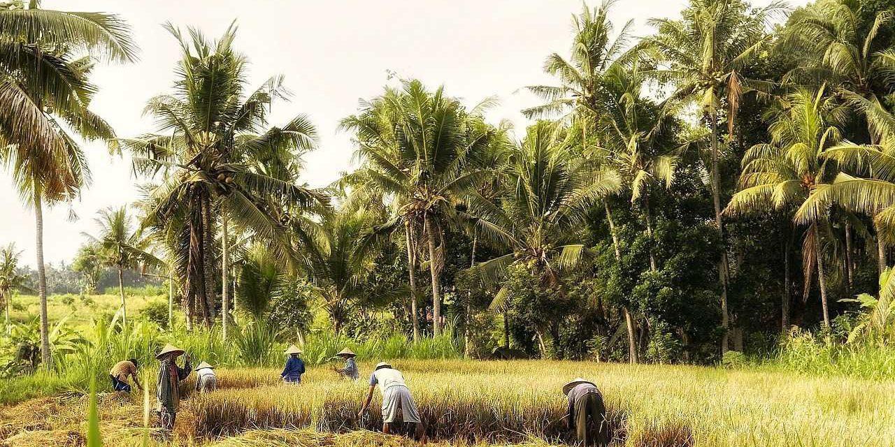 Ekologi – Pengertian, Ruang Lingkup, Aspek & Manfaat