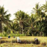 Ekologi - Pengertian, Ruang Lingkup, Aspek & Manfaat
