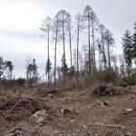 Penebangan Hutan Secara Liar - Pengertian, Hukum & Dampak