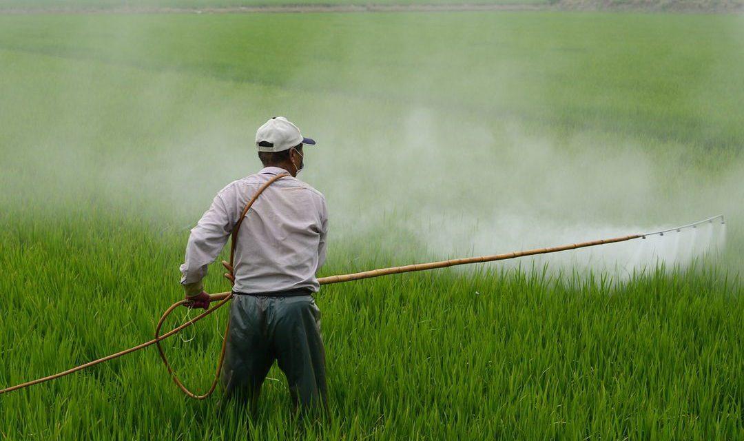 Sistem Pertanian Terpadu – Pengertian, Tujuan & Kendala