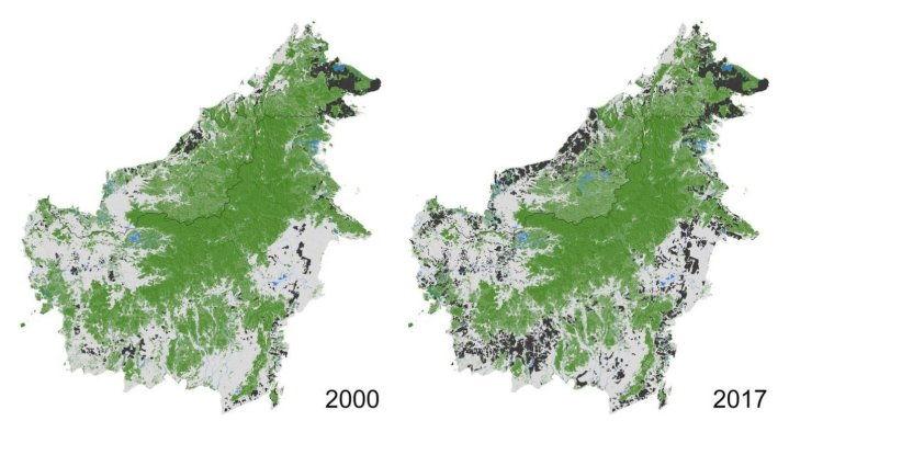peta deforestasi kalimantan
