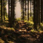 Hutan Lindung – Pengertian, Status Fungsi & Kawasan