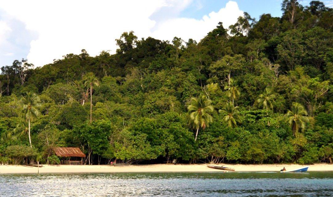 Hutan Pantai – Pengertian, Ciri, Formasi, Ragam dan Manfaat