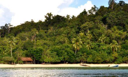 Keanekaragaman Jenis Tumbuhan di Indonesia